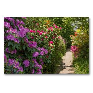 Premium Textil-Leinwand 90 cm x 60 cm quer Blühende Rhododendren
