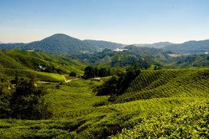Premium Textil-Leinwand 45 cm x 30 cm quer Teeplantage