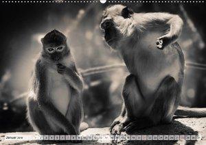 Wilde Tiere in schwarz-weiß
