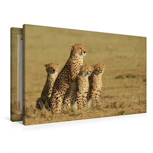 Premium Textil-Leinwand 90 cm x 60 cm quer Geparden auf Beutesuc
