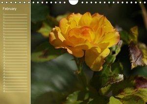Delicate Beauties Magnificent Roses (Wall Calendar perpetual DIN