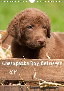 Chesapeake Bay Retriever 2019 (Wandkalender 2019 DIN A4 hoch)