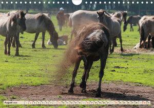 Dülmener Wildpferde - Lebensraum Meerfelder Bruch