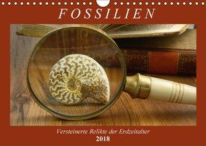 Fossilien - Versteinerte Relikte der Erdzeitalter