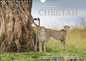 Emotional Moments: Cheetah UK Version (Wall Calendar 2015 DIN A4