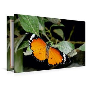 Premium Textil-Leinwand 120 cm x 80 cm quer Monarch
