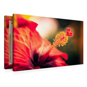 Premium Textil-Leinwand 75 cm x 50 cm quer Hibiskus-Blüte, rot