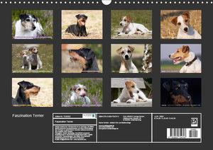 Faszination Terrier (Wandkalender 2019 DIN A3 quer)