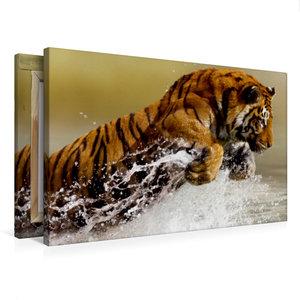 Premium Textil-Leinwand 75 cm x 50 cm quer Tiger lieben das Wass
