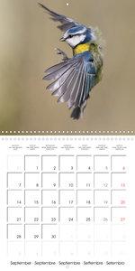 Garden Birds in Flight (Wall Calendar 2020 300 × 300 mm Square)