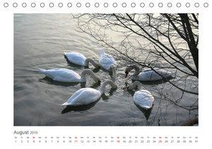 Unterwegs im Landsberger Wildpark (Tischkalender 2019 DIN A5 que