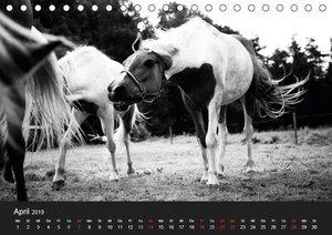 Landtiere (Tischkalender 2019 DIN A5 quer)