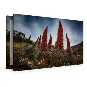 Premium Textil-Leinwand 90 cm x 60 cm quer Tajinaste Pflanzen im