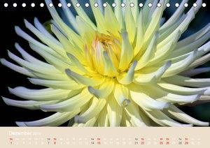 Dahlien (Tischkalender 2019 DIN A5 quer)