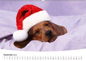 Süße Träume 2018 - schlafende Hundewelpen