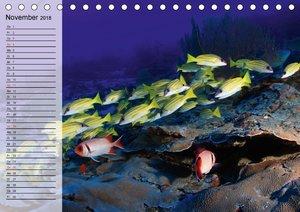 Paradiese im ewigen Blau. Die bunte Unterwasserwelt