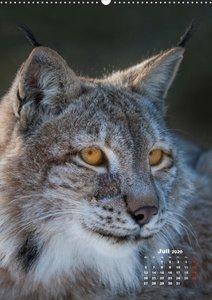 Emotionale Momente: Raubkatzen - die schnellen Jäger.