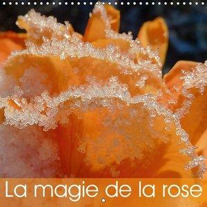 La magie de la rose (Calendrier mural 2015 300 × 300 mm Square)