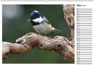 Heimische Gartenvögel Gefiederte Freunde (Wandkalender 2019 DIN