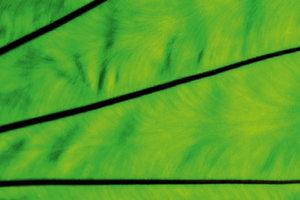 Premium Textil-Leinwand 75 cm x 50 cm quer Strukturen der Natur