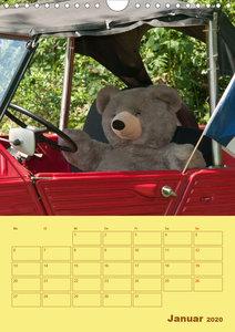 Bärenstarker Planer für das Jahr ? Teddys