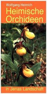 Heimische Orchideen in Jenas Landschaft
