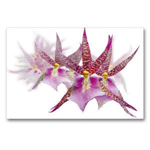 Premium Textil-Leinwand 90 cm x 60 cm quer Dendrobium Orchideenr