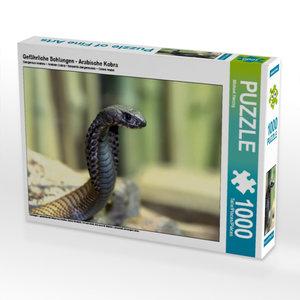 Gefährliche Schlangen - Arabische Kobra 1000 Teile Puzzle quer