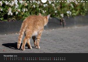 Spontane Fotografie: Tierpopos (Wandkalender 2019 DIN A4 quer)