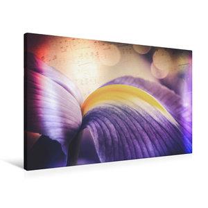 Premium Textil-Leinwand 90 cm x 60 cm quer Iris-Blüte, blau