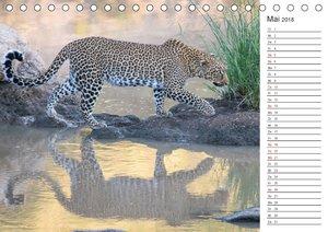 Emotionale Momente: Die besten Wildlifefotos aus Afrika.
