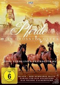 Pferde-Mein größtes Glück