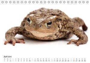 Der kleine Gecko und seine Freunde (Tischkalender 2016 DIN A5 qu