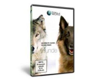 Alles über Hunde-Discovery World
