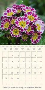 Stunning Spring Flowers (Wall Calendar 2016 300 × 300 mm Square)