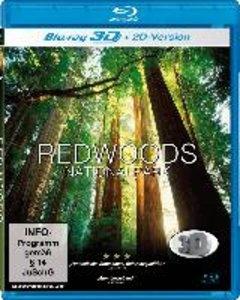 Lebende Landschaften - Redwoods Nationalparks in 3D