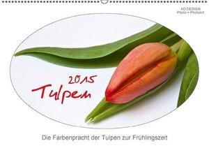 Dölling, A: Tulpen (Wandkalender 2015 DIN A2 quer)