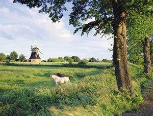 Ravensburger 16635 - Pferde vor Windmühle, 2000 Teile Puzzle