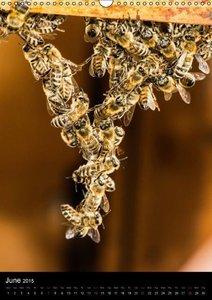 Bees (Wall Calendar 2015 DIN A3 Portrait)