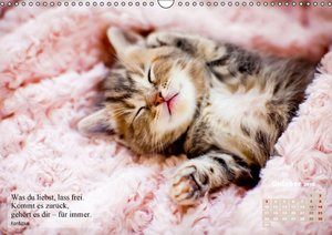Der Katzenkalender für Hanna (Wandkalender 2016 DIN A3 quer)