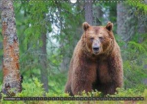 Magie des Augenblicks - Bären in nordischen Wäldern (Wandkalende