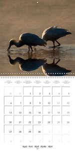 Emotional Moments: Reflection - African Wildlife images (Wall Ca