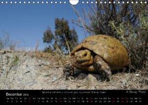 European Tortoises / UK-Version (Wall Calendar 2015 DIN A4 Lands