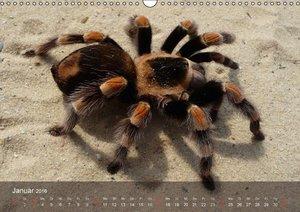 Faszination Spinnen (Wandkalender 2016 DIN A3 quer)