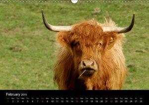 Images of Scotland (Wall Calendar 2015 DIN A3 Landscape)