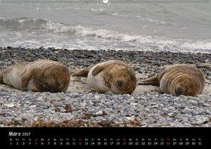 Kegelrobben und Seehunde