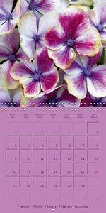 Hydrangea Heaven (Wall Calendar 2015 300 × 300 mm Square)