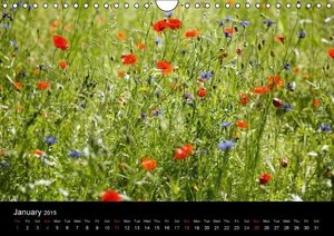 Poppies / UK-Version (Wall Calendar 2015 DIN A4 Landscape)