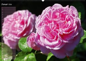 Lass Rosen sprechen (Wandkalender 2016 DIN A2 quer)