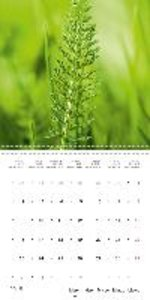 WILD AND HEALTHY Edible wild plants (Wall Calendar 2015 300 × 30